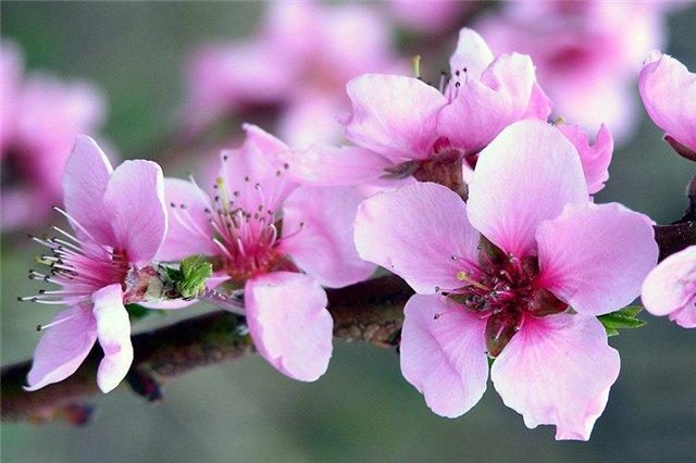 http://www.almas-expo.ru/data/image/Flowers%202.jpg