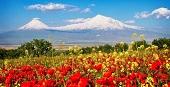 8 марта в Армении!